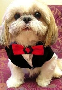 Valentine Tuxedo - My Pets Wardrobe Dog Clothes Australia