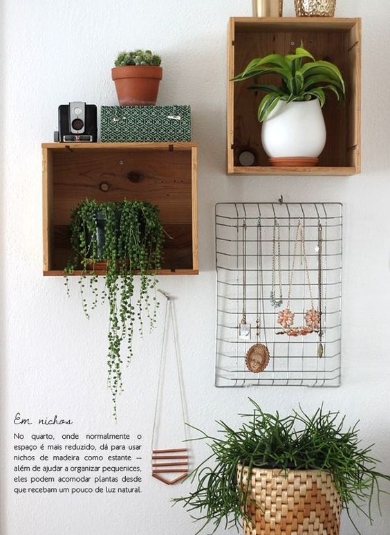 Plantas na estante: