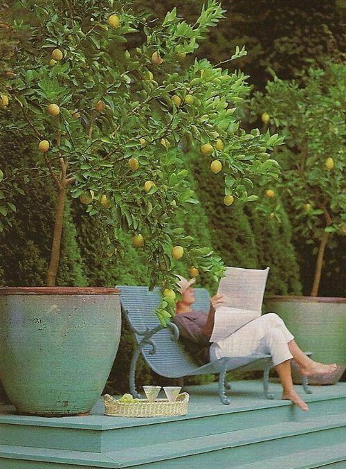 pots for bay/olive/lemon trees