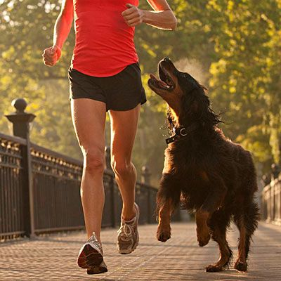 Don't: Run when it's too hot: Health, safety, and behavioral running tips for logging miles with your four-legged fitness partner. | Health.com