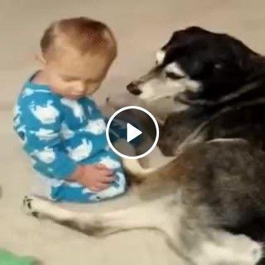 É por isso que precisamos ter um cão dentro de casa