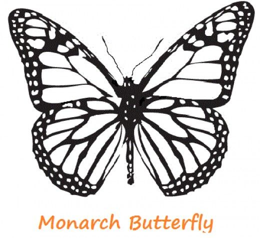 Butterflies, Monarch butterfly and Coloring pages on Pinterest