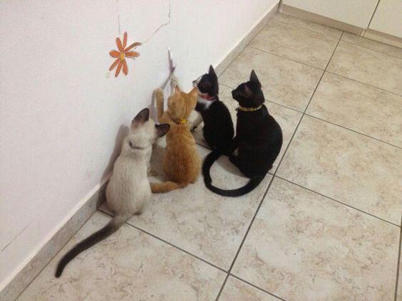 Convenção de gatos para ver quem arranca o adesivo da parede kkkk Sety, Flyn, Dafne e Brad