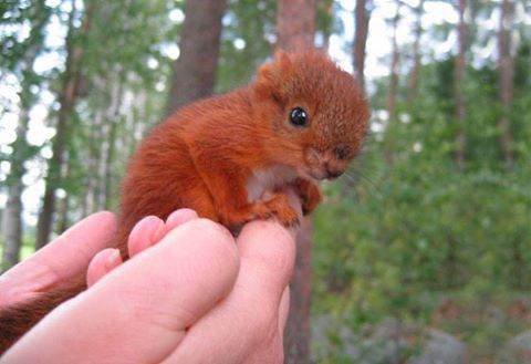 A Badly Injured Baby Squirrel Gets Adopted By family in Finland. Google+Stylish Eve