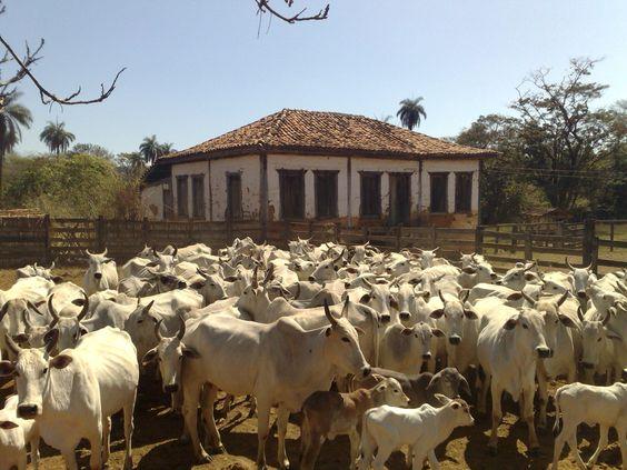 Fazenda Quati / Abaeté MG