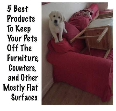 5 Best Products To Keep Your Pets Off Furniture Counters And