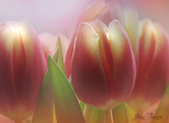 Attention! It's Spring! by Jean Turner Cain, via Flickr