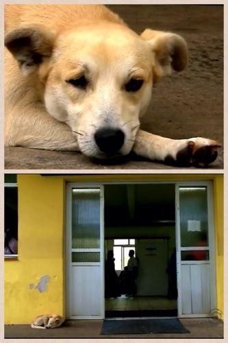 blogAuriMartini: Cachorro a espera de seu dono por 10 Dias na frente do hospital - Amigo do Peito