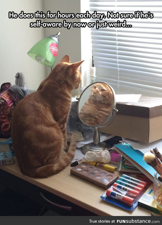 He's Waiting For That Other Cat To Make A Move