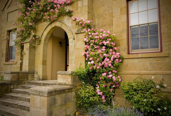 Gardening Q&A: climbing and rambling roses  I want to plant some roses on a pergola but I don't know the difference between a climber and rambler.  http://www.saga.co.uk/lifestyle/gardening/q-and-a/ramblingandclimbingroses.aspx  #Saga   #Gardening   #News