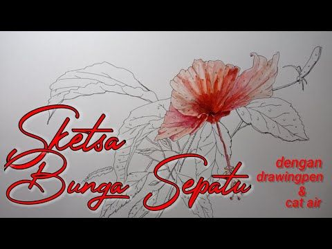 Sketsa Bungasepatu Sketsa Bunga Sepatu Dengan Drawing Pen Dan Cat Air Youtube Cara Menggambar Menggambar Dengan Pena Drawing