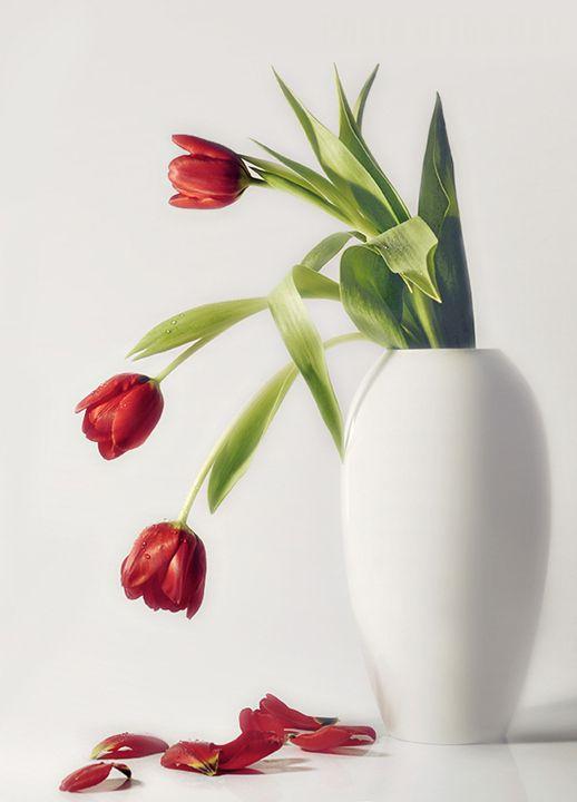 Sad tulips by Heidi Westum, via 500px