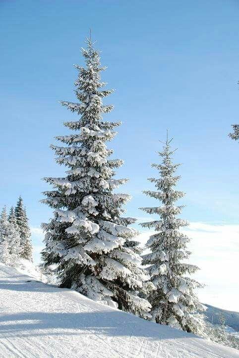 Pin By Ewa Gic On Rysunek With Images Swiateczne Tla Zima Snieg