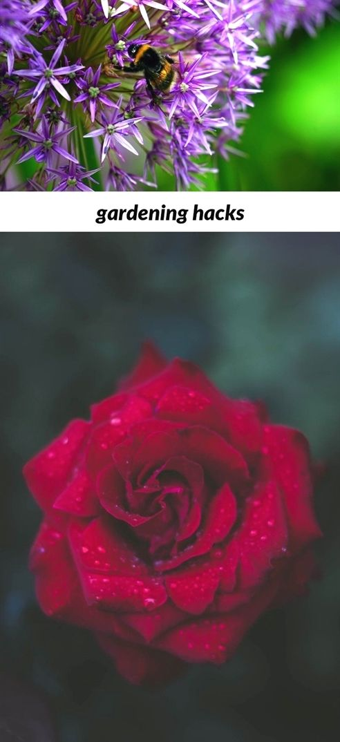 Gardening Hacks 15 20181201200553 53 Garden News Magazine Uk