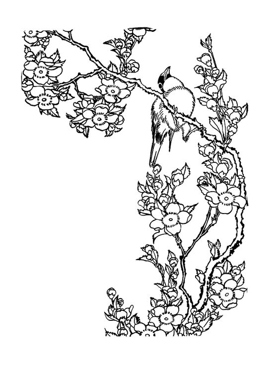 Birds - 999 Coloring Pages | coloring | Pinterest | Coloring ...