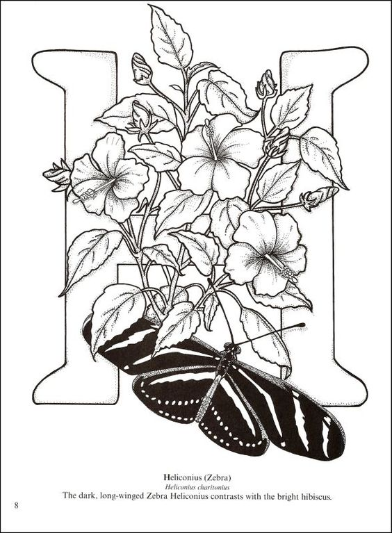 Butterfly Alphabet Coloring Book Color Me Crazy