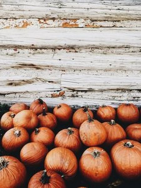 Thanksgiving Aesthetic 9 Fall Wallpaper Fall Background Autumn Aesthetic