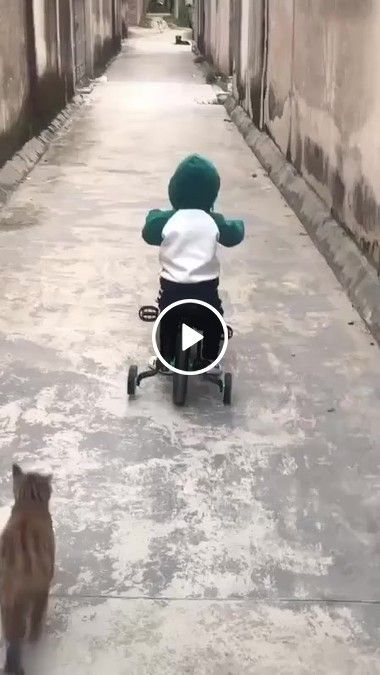 Gatinho assusta cachorro.