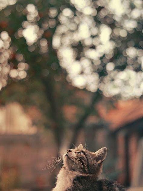 Pin Oleh Jemima Starla Di Foto Kucing Lucu Foto Kucing Lucu Kucing Menggambar Kucing