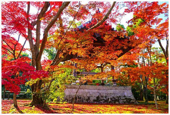 Autumn Colors At Kinkakuji - Kyoto, Kyoto
