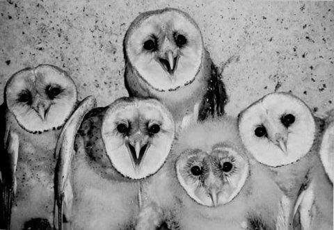 awww. little owls