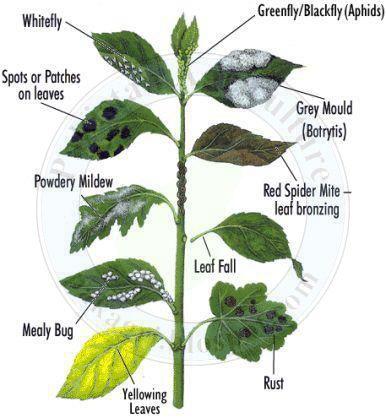 Leaf diseases on plants