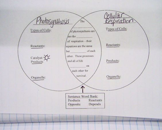 Photosynthesis And Respiration Worksheet Virallyapp Printables – Photosynthesis and Cellular Respiration Worksheet Answers