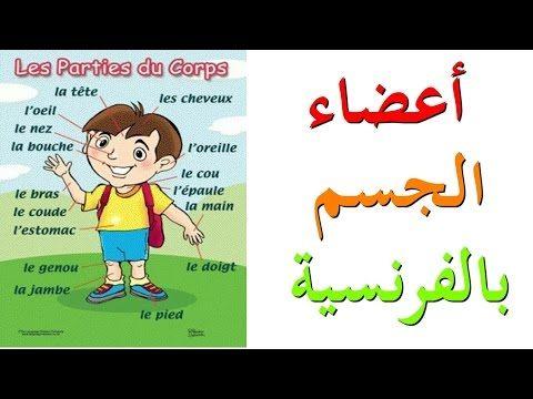 تعليم اللغة الفرنسية أعضاء الجسم بالفرنسية Les Parties Du Corps Https Ift Tt 2loutbn درس لغة فرنسية بالعربى Family Guy Language Character