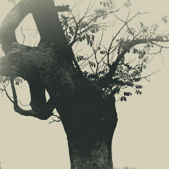 Pobre árbol #BW