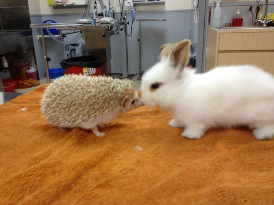 Baby bunny and hedgehog