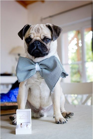 mariée, bride, mariage, wedding, alliance, ring, dog chien