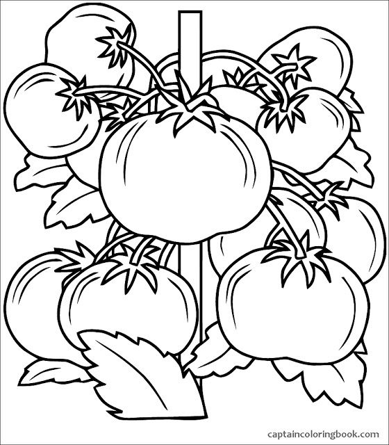 Your Seo Optimized Title Vegetable Coloring Pages Coloring Pages Pumpkin Coloring Pages