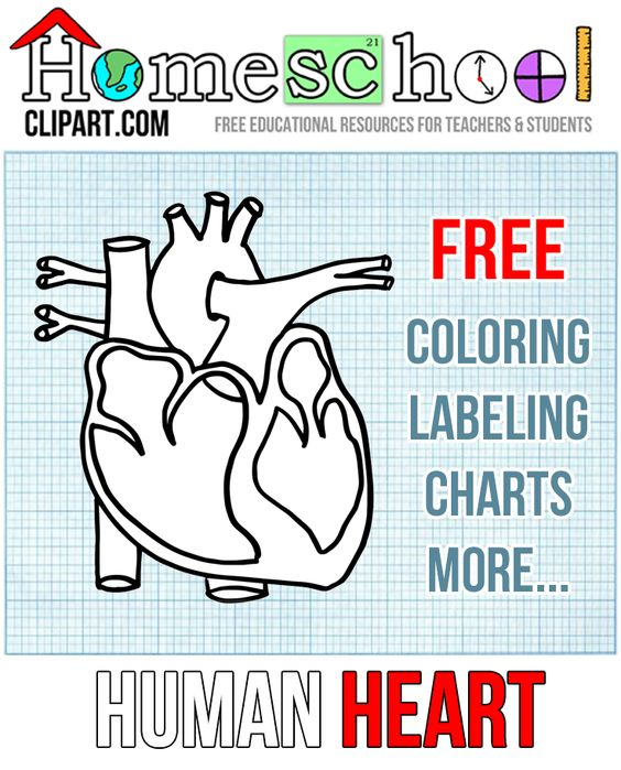 Human Heart Resources for Homeschool: