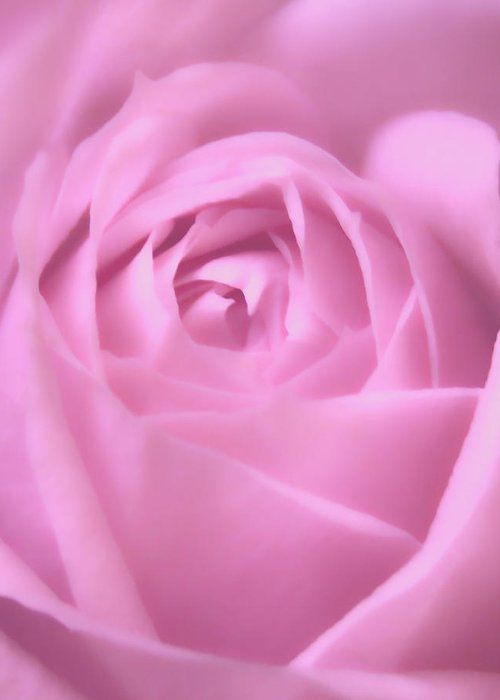 Soft And Beautiful Rose Macro Photograph Greeting Card For Sale By