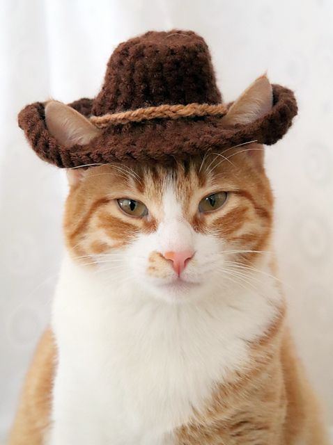 Fall Hat Month Celebrate With An Eye Catching Cat Hat Hat For Cat Crochet Cat Hat Cats With Hats