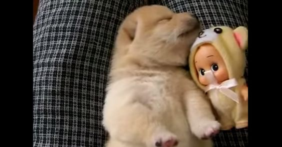 Puppy Has A Bad Dream. cuteness overload