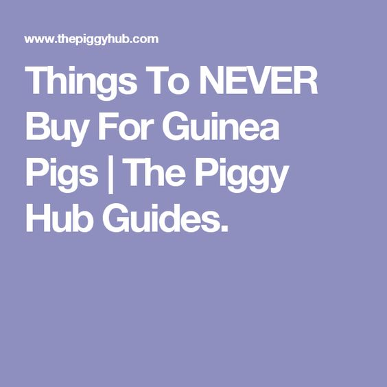 Things To NEVER Buy For Guinea Pigs | The Piggy Hub Guides.