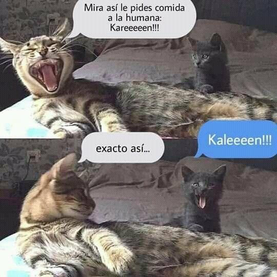 Memes De Karen Y Su Gato Segunda Parte Memes En Espanol La Mejor Recopilacion De Memes Lo Memes Graciosos De Animales Memes De Animales Divertidos Memes