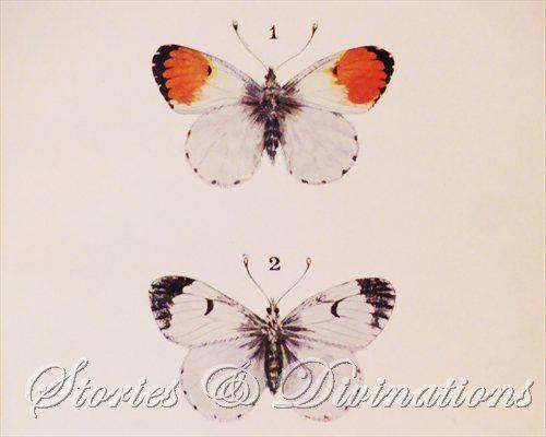 Butterflies  Original Antique Butterflies by StoriesDivinations, $21.00