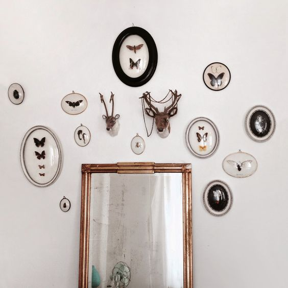 Wall butterfly entomology cadre bombé collection mirror