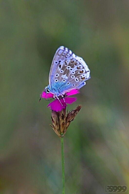 The colour :)