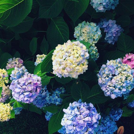 Flowers>summer