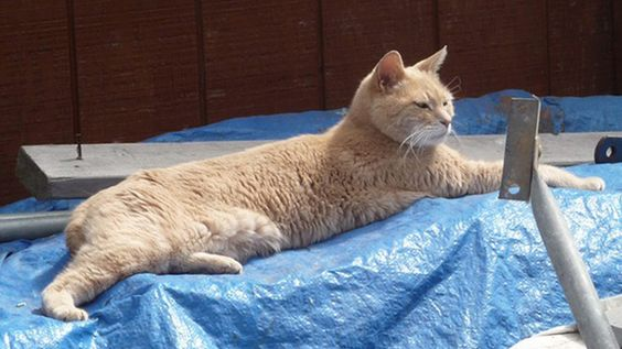 Stubbs, a 15-year-old cat, has been the mayor of Talkeetna, Alaska, since shortly after he was born.