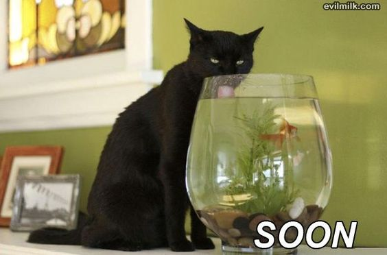 Yup Cats Actually Do Love Water Cute Cats Cats Black Cat