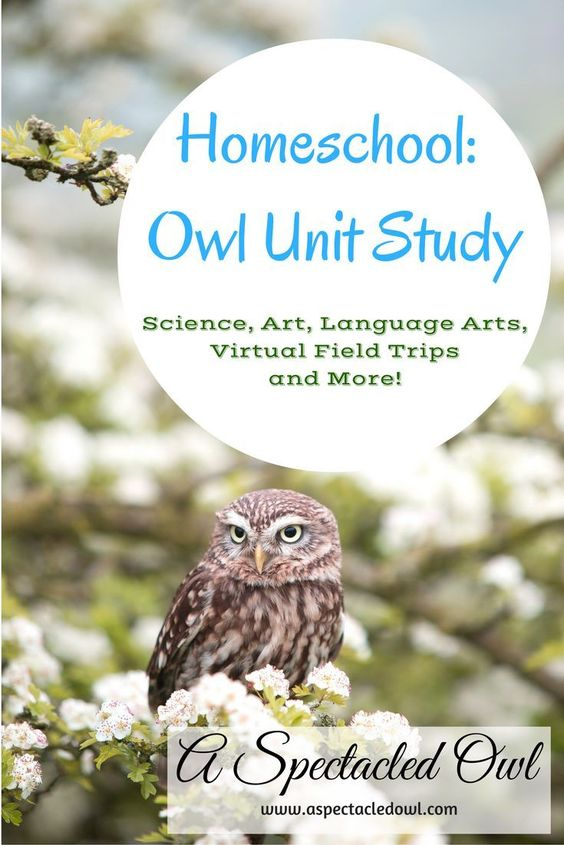 Homeschool: Owl Unit Study - Owls are majestic, beautiful creatures that pretty much anyone can enjoy learning about. I love that homeschooling offers so many options, especially when it comes to Unit Studies. Use this Owl Unit Study to get the thinking t