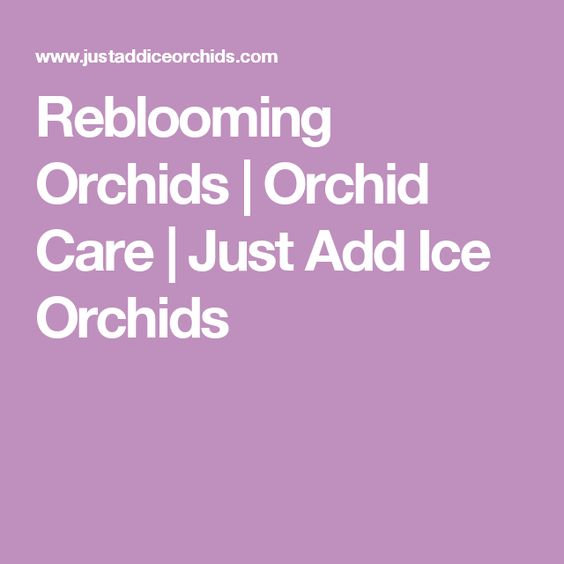 reblooming orchids orchid care just add ice orchids gardening pinterest orchideje a led. Black Bedroom Furniture Sets. Home Design Ideas