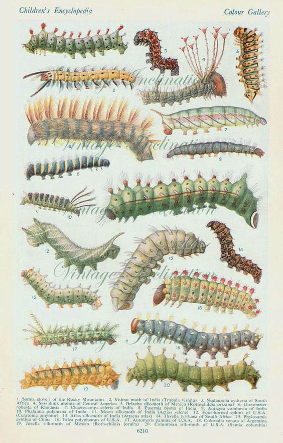 Antique Natural History Print 1930s INSECTS Woodland Forest Illustration - caterpillars grubs pupa moth Insects Art Print