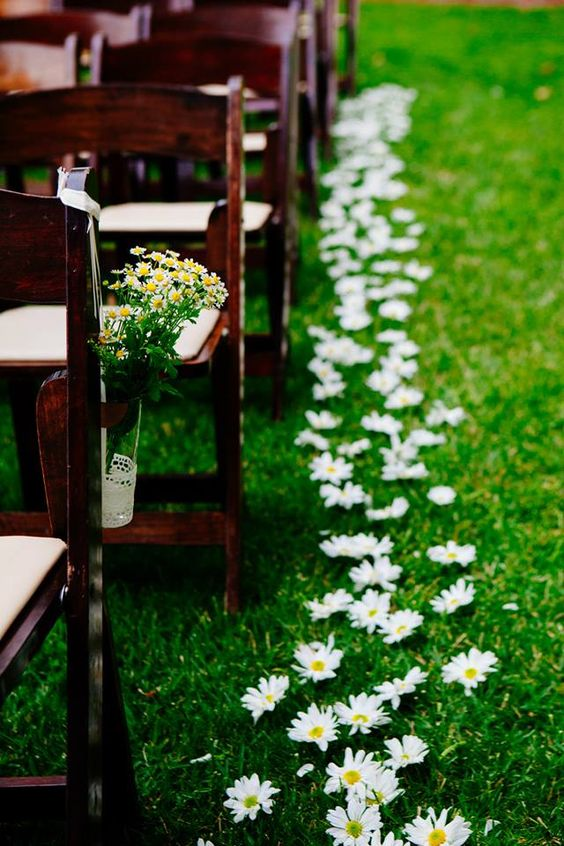 Daisies for the flower girls to throw instead of rose pedals: