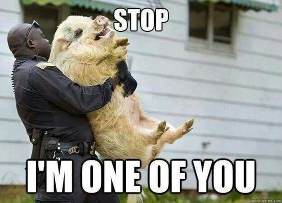 Pigs. ... lol
