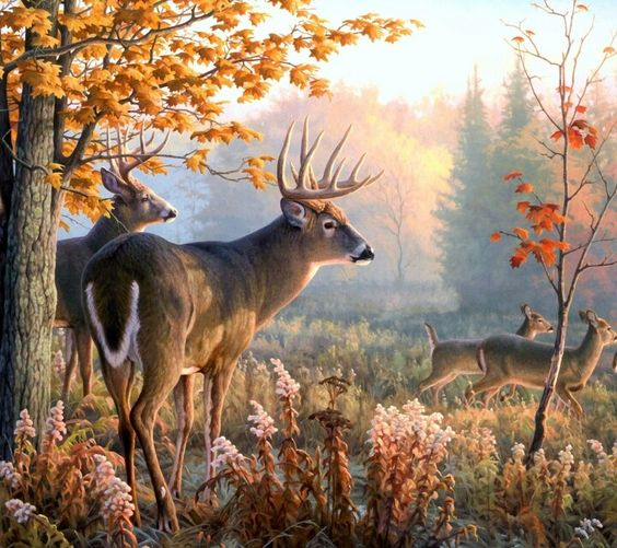 Really Cool Painting Of White Tail Deer Animals